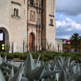 Agave growing at Santo Domingo