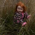 Juniper in grass