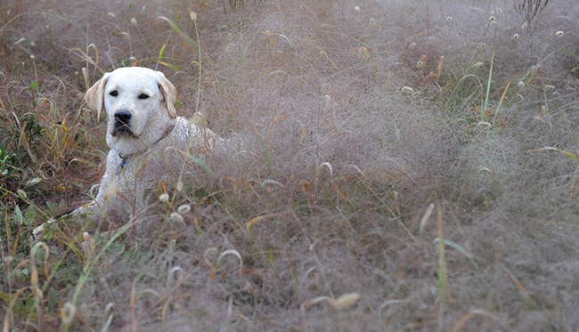 Duke at Blandy in fall