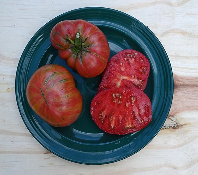 Tomato Freezy family #5548