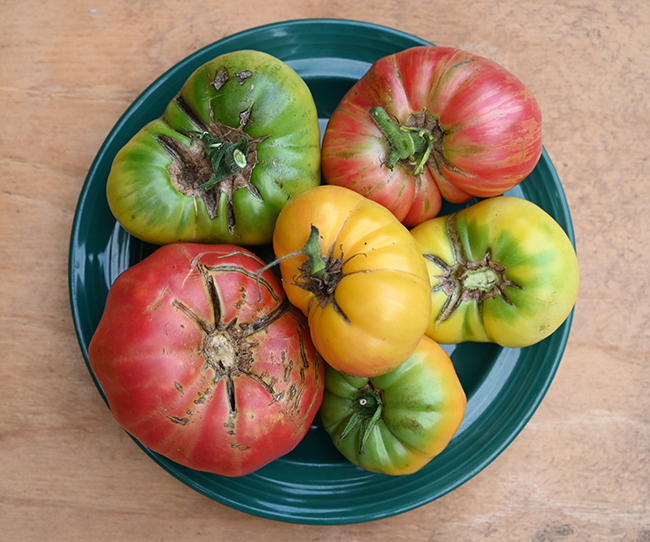 Plate of tomatoes