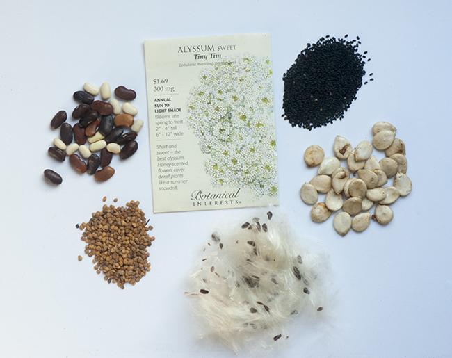 Seeds for garden