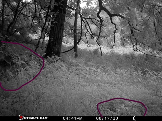 Deer looking at newborn marked