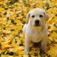 Duke as puppy
