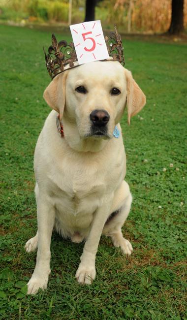 Duke on his 5th birthday