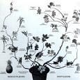 Tree of evolution