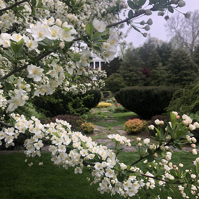 Oak Hill with crabapple flowers